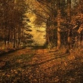 autumnal sunshine1